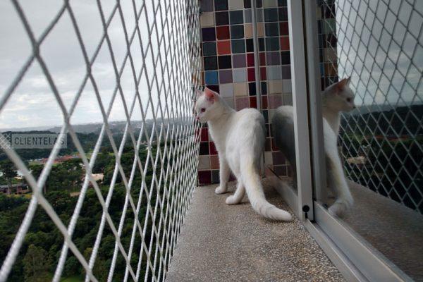 LinhaPet-gato-Clientelas